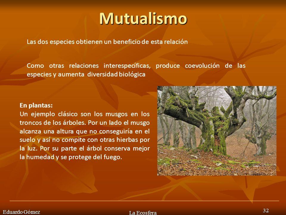 Mutualismo Eduardo Gómez La Ecosfera 32 Las dos especies obtienen un beneficio de esta relación En plantas: Un ejemplo clásico son los musgos en los t