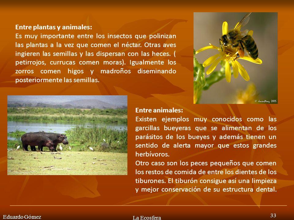 Eduardo Gómez La Ecosfera 33 Entre plantas y animales: Es muy importante entre los insectos que polinizan las plantas a la vez que comen el néctar. Ot