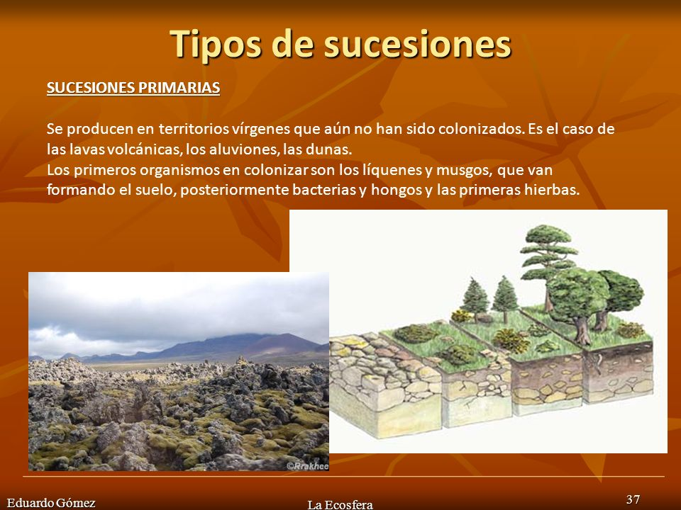 Tipos de sucesiones Eduardo Gómez La Ecosfera 37 SUCESIONES PRIMARIAS Se producen en territorios vírgenes que aún no han sido colonizados. Es el caso