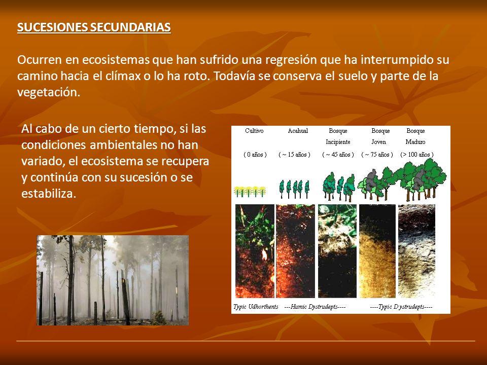 SUCESIONES SECUNDARIAS Ocurren en ecosistemas que han sufrido una regresión que ha interrumpido su camino hacia el clímax o lo ha roto. Todavía se con