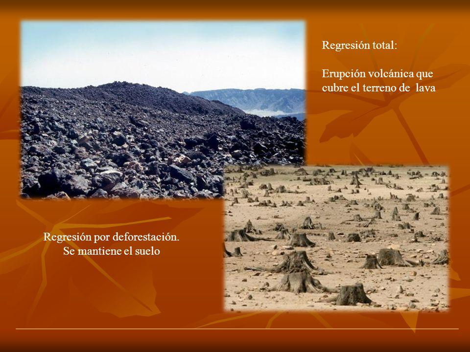 Regresión total: Erupción volcánica que cubre el terreno de lava Regresión por deforestación. Se mantiene el suelo