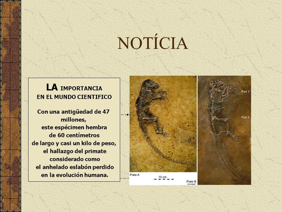 NOTÍCIA LA IMPORTANCIA EN EL MUNDO CIENTIFICO Con una antigüedad de 47 millones, este espécimen hembra de 60 centímetros de largo y casi un kilo de pe