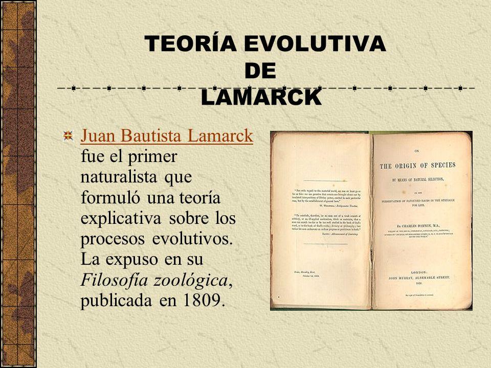 TEORÍA EVOLUTIVA DE LAMARCK Juan Bautista Lamarck Juan Bautista Lamarck fue el primer naturalista que formuló una teoría explicativa sobre los proceso