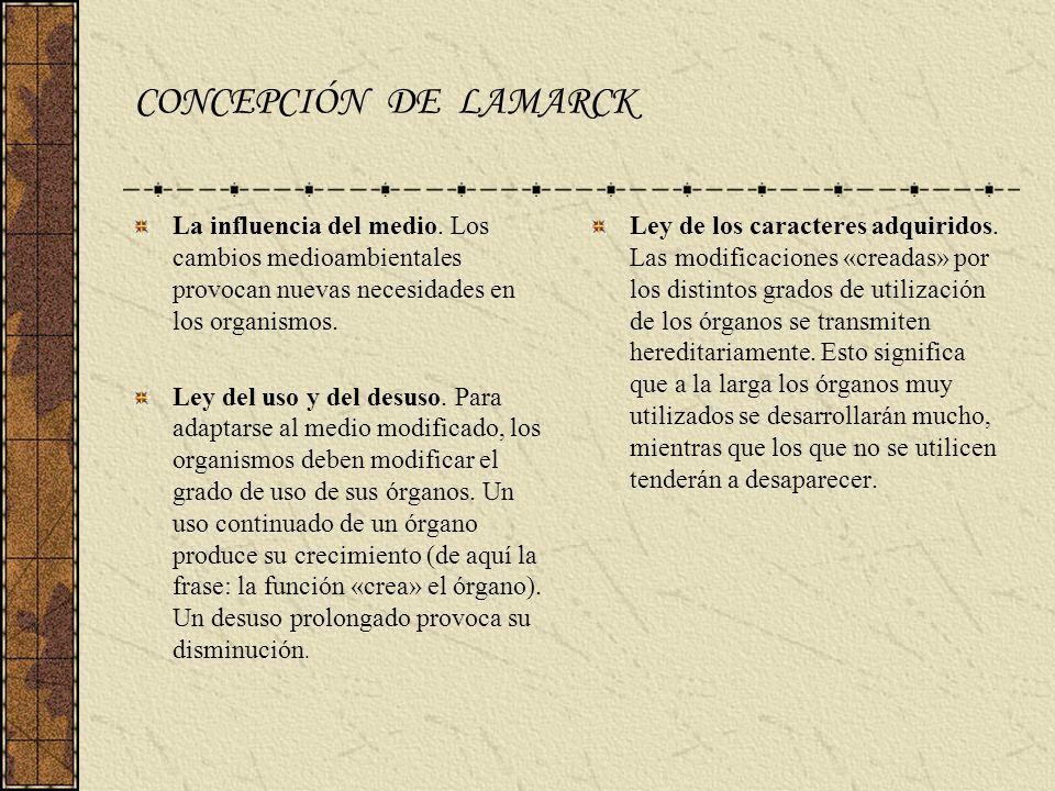 LAMARCK Vs DARWIN LAMARCK: Los cambios ambientales originan nuevas necesidades Éstas determinan el uso o desuso de unos u otros órganos.