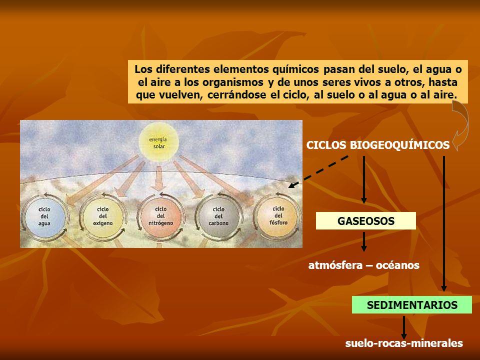 CICLOS BIOGEOQUÍMICOS Los diferentes elementos químicos pasan del suelo, el agua o el aire a los organismos y de unos seres vivos a otros, hasta que v