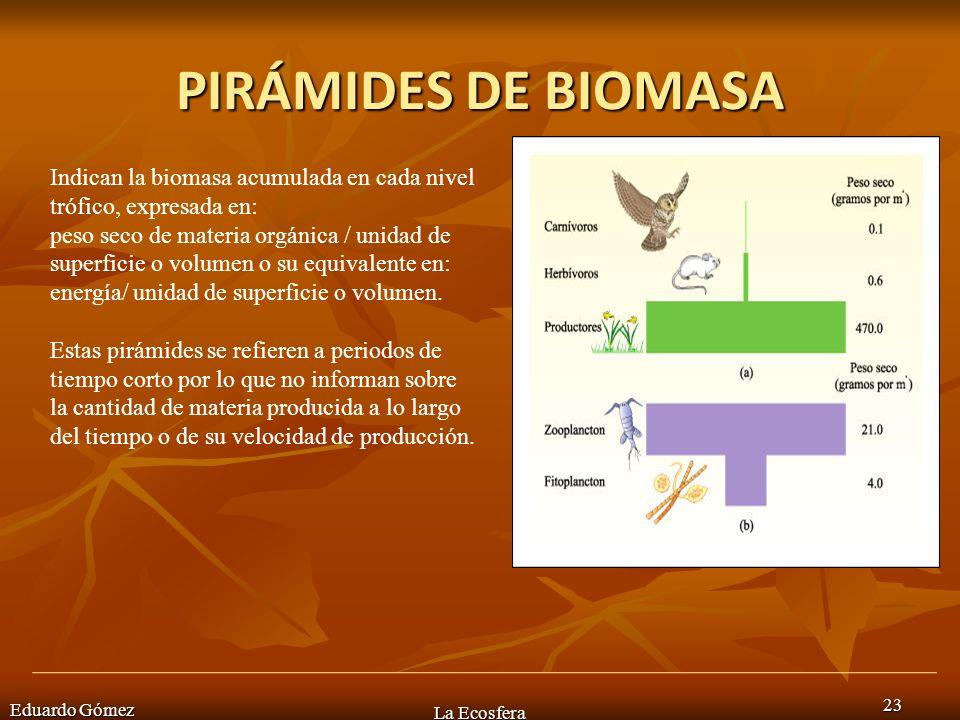 PIRÁMIDES DE BIOMASA Eduardo Gómez La Ecosfera 23 Indican la biomasa acumulada en cada nivel trófico, expresada en: peso seco de materia orgánica / un