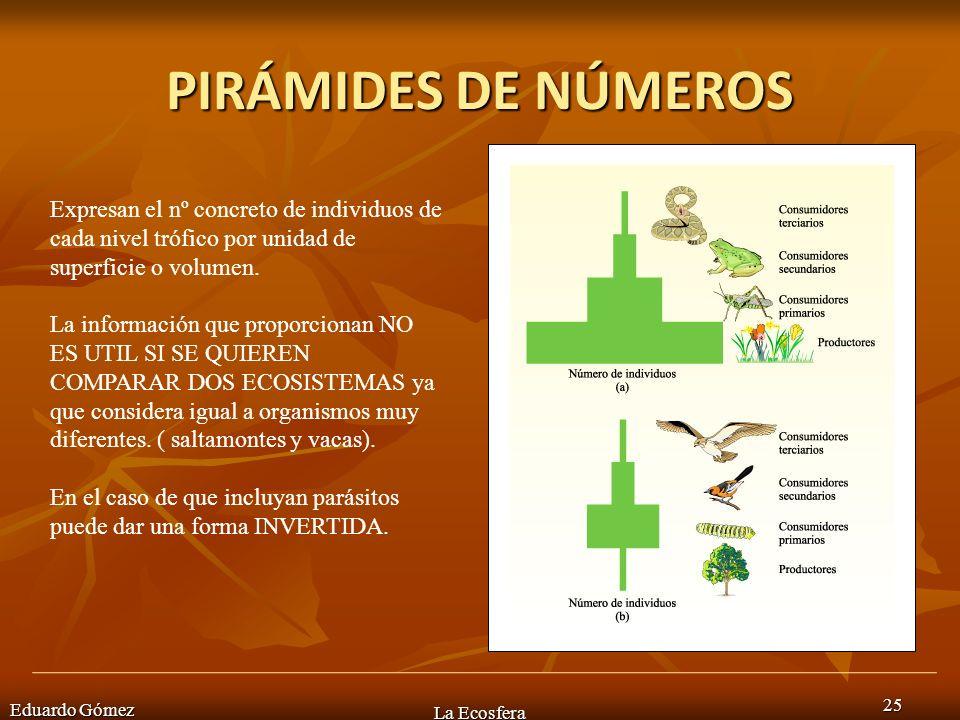 PIRÁMIDES DE NÚMEROS Eduardo Gómez La Ecosfera 25 Expresan el nº concreto de individuos de cada nivel trófico por unidad de superficie o volumen. La i