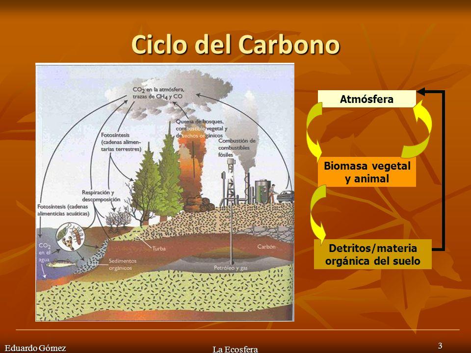 Eduardo Gómez La Ecosfera 24 Esto puede inducir a que en algunos momentos se observen PIRÁMIDES INVERTIDAS debido a que los datos se toman en un momento determinado, por ejemplo cuando los datos se toman en el momento de mayor consumo por parte de los herbívoros, como en algunos ecosistemas marinos.