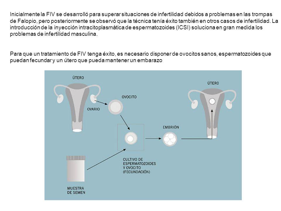 EXTRACCIÓN DE OVOCITOS La extracción de los ovocitos se realiza por vía transvaginal, utilizando una aguja guiada por ultrasonidos, que pincha la pared vaginal para alcanzar los ovarios.