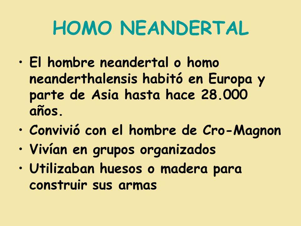 HOMO NEANDERTAL El hombre neandertal o homo neanderthalensis habitó en Europa y parte de Asia hasta hace 28.000 años. Convivió con el hombre de Cro-Ma