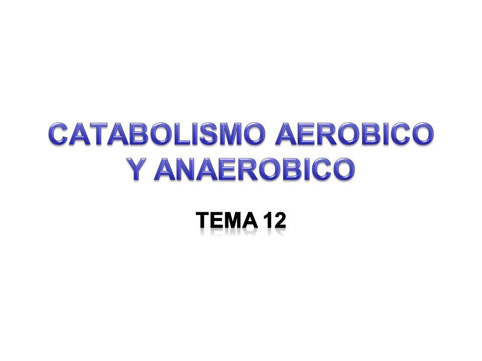 Concepto de catabolismo.