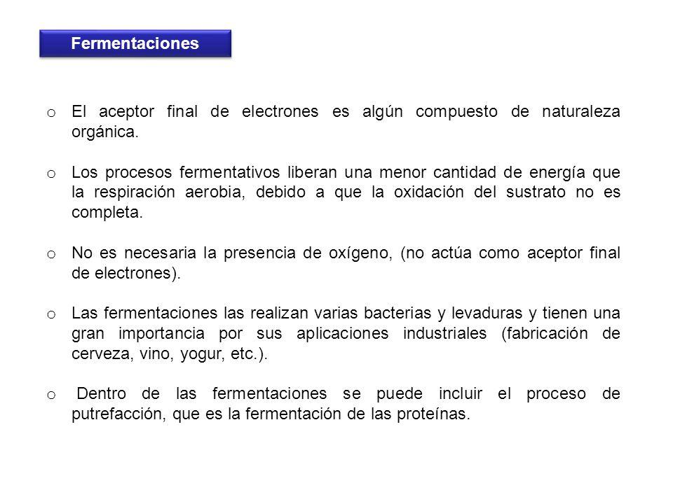 o El aceptor final de electrones es algún compuesto de naturaleza orgánica. o Los procesos fermentativos liberan una menor cantidad de energía que la