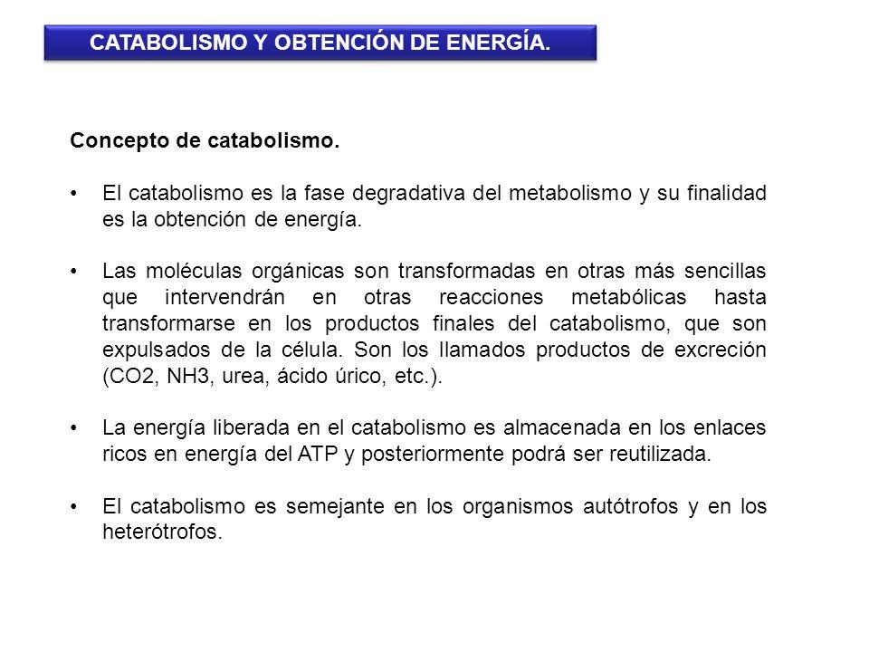 Concepto de catabolismo. El catabolismo es la fase degradativa del metabolismo y su finalidad es la obtención de energía. Las moléculas orgánicas son