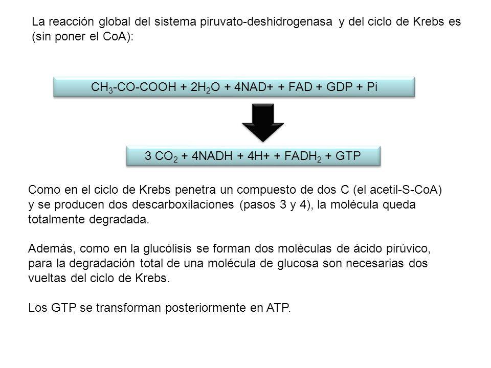 Como en el ciclo de Krebs penetra un compuesto de dos C (el acetil-S-CoA) y se producen dos descarboxilaciones (pasos 3 y 4), la molécula queda totalm