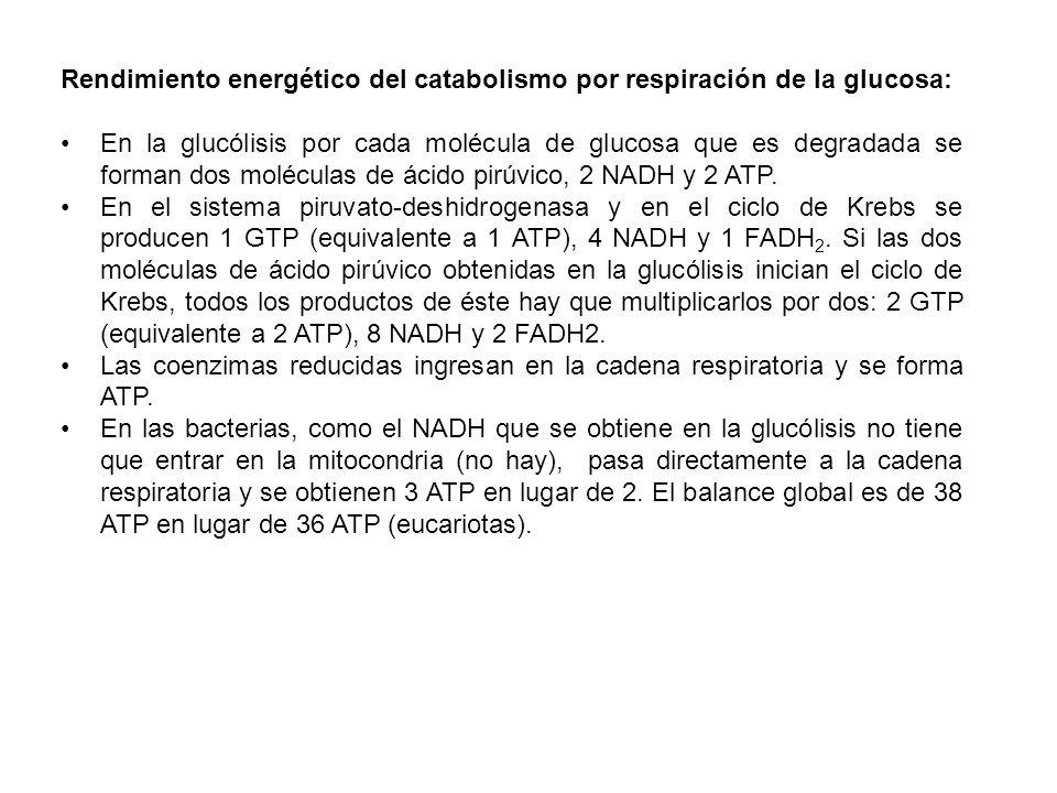 Rendimiento energético del catabolismo por respiración de la glucosa: En la glucólisis por cada molécula de glucosa que es degradada se forman dos mol