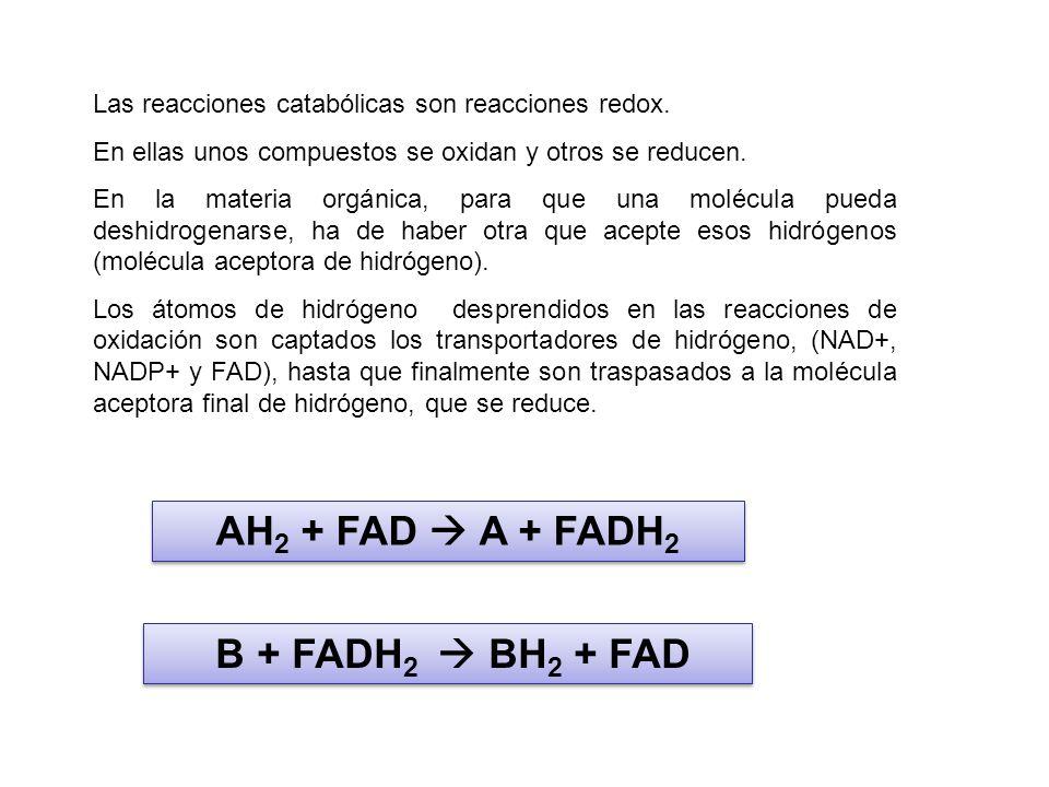 Las reacciones catabólicas son reacciones redox. En ellas unos compuestos se oxidan y otros se reducen. En la materia orgánica, para que una molécula