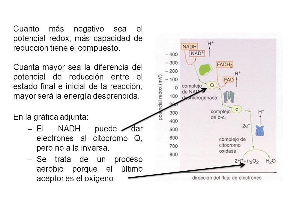 En esta cadena, los transportadores de electrones pueden estar agrupados en grandes complejos de enzimas respiratorios, que se ocupan de transportar simultáneamente electrones y protones (H+) complejo NADH deshidrogenasa el complejo coenzima-Q reductasa o ubiquinona, los citocromos: complejo de citocromos b-C1, complejo citocromo-oxidasa La energía que se libera cuando pasan los electrones se utiliza para bombear protones desde la matriz mitocondrial al espacio intermembrana.