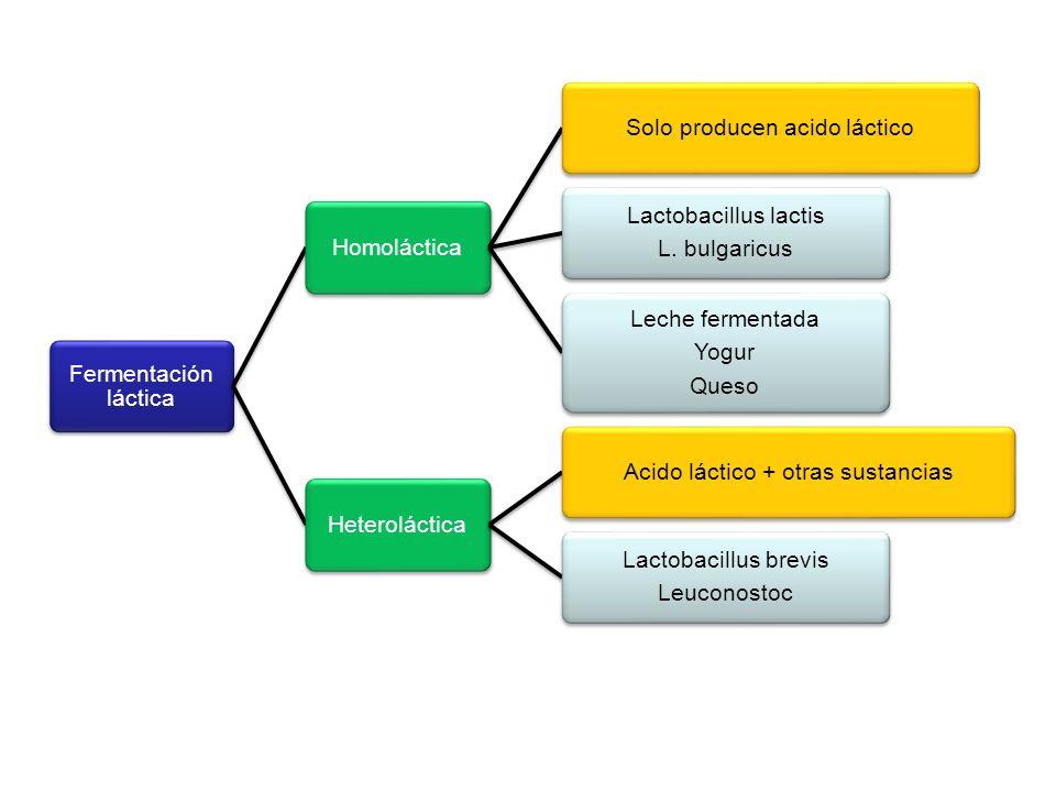 Fermentación láctica HomolácticaSolo producen acido láctico Lactobacillus lactis L. bulgaricus Leche fermentada Yogur Queso HeterolácticaAcido láctico