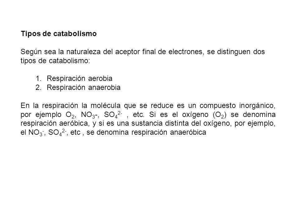 Tipos de catabolismo Según sea la naturaleza del aceptor final de electrones, se distinguen dos tipos de catabolismo: 1.Respiración aerobia 2.Respirac