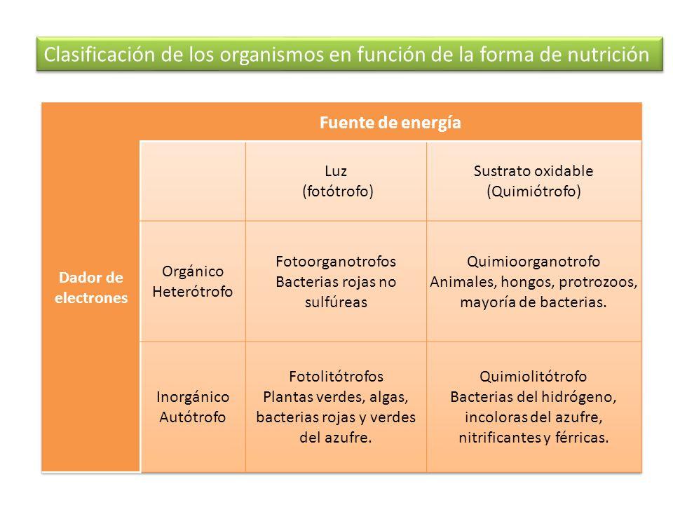 Importancia biológica de la fotosíntesis 1.Conversión de materia inorgánica en orgánica.