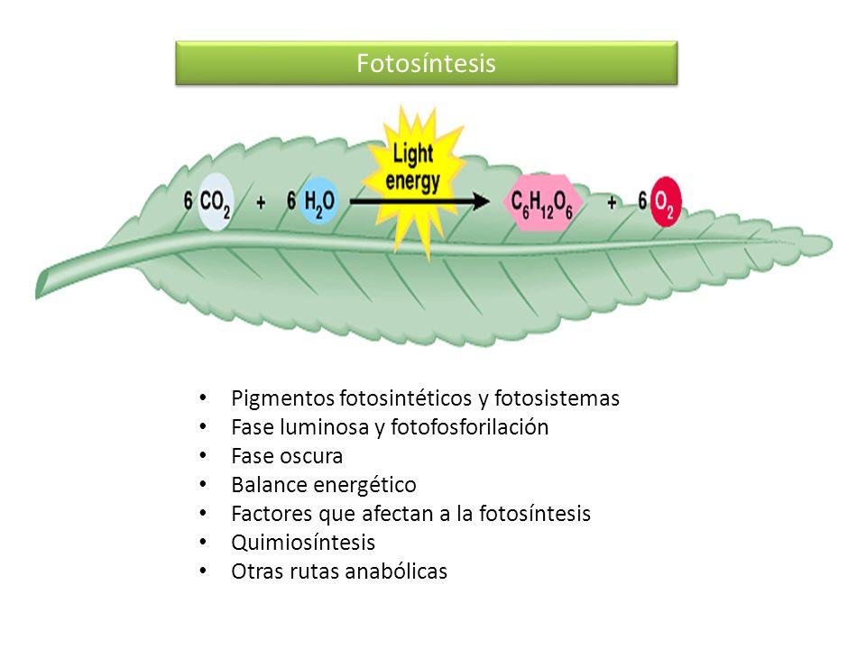 Fotosíntesis Pigmentos fotosintéticos y fotosistemas Fase luminosa y fotofosforilación Fase oscura Balance energético Factores que afectan a la fotosí