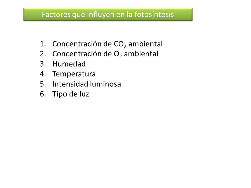 Factores que influyen en la fotosíntesis 1.Concentración de CO 2 ambiental 2.Concentración de O 2 ambiental 3.Humedad 4.Temperatura 5.Intensidad lumin