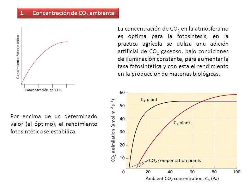1.Concentración de CO 2 ambiental Por encima de un determinado valor (el óptimo), el rendimiento fotosintético se estabiliza. La concentración de CO 2