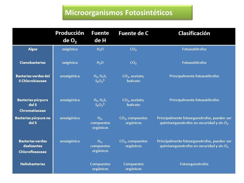 Producción de O 2 Fuente de H Fuente de CClasificación AlgasoxigénicaH2OH2OCO 2 Fotoautótrofos CianobacteriasoxigénicaH2OH2OCO 2 Fotoautótrofos Bacter