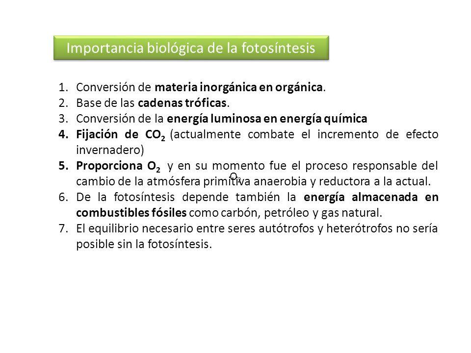 Importancia biológica de la fotosíntesis 1.Conversión de materia inorgánica en orgánica. 2.Base de las cadenas tróficas. 3.Conversión de la energía lu