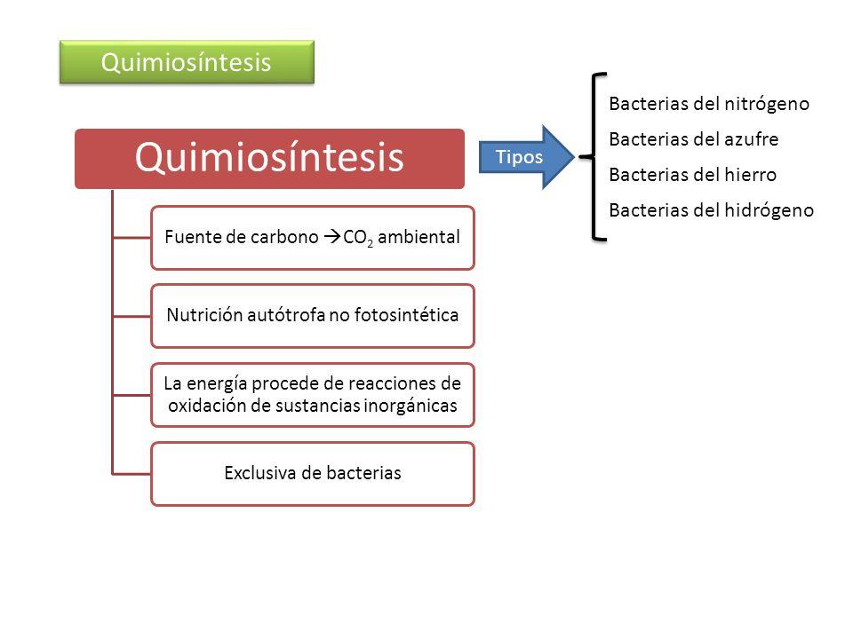 Quimiosíntesis Fuente de carbono CO2 ambientalNutrición autótrofa no fotosintética La energía procede de reacciones de oxidación de sustancias inorgán