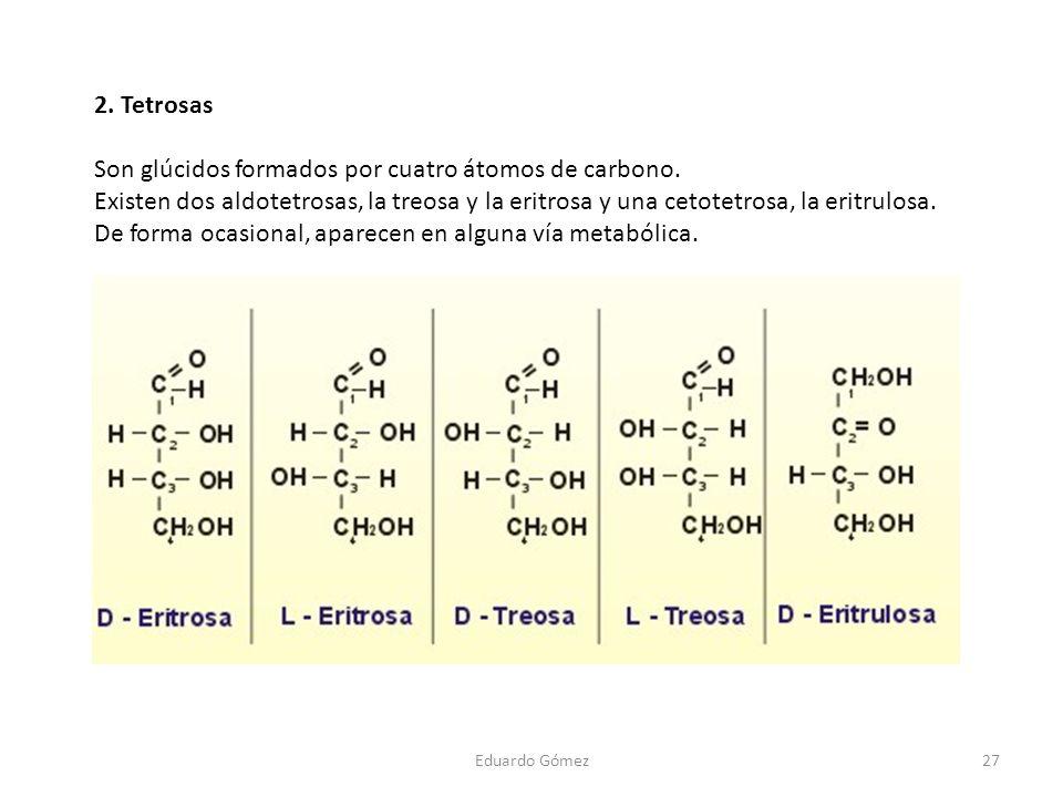 2. Tetrosas Son glúcidos formados por cuatro átomos de carbono. Existen dos aldotetrosas, la treosa y la eritrosa y una cetotetrosa, la eritrulosa. De