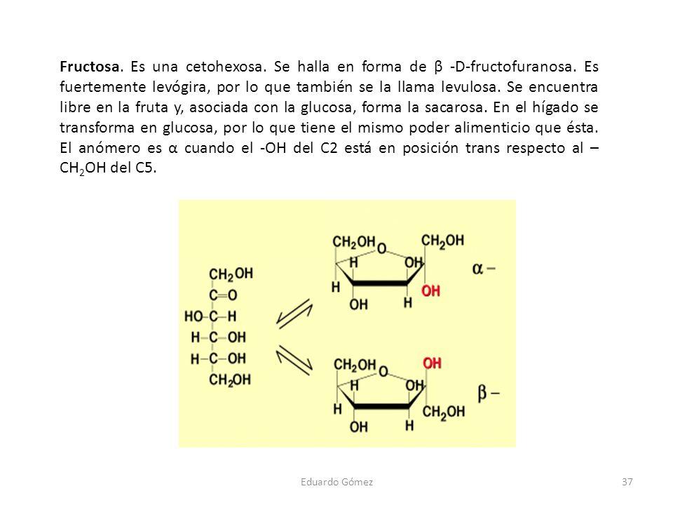Fructosa. Es una cetohexosa. Se halla en forma de β -D-fructofuranosa. Es fuertemente levógira, por lo que también se la llama levulosa. Se encuentra