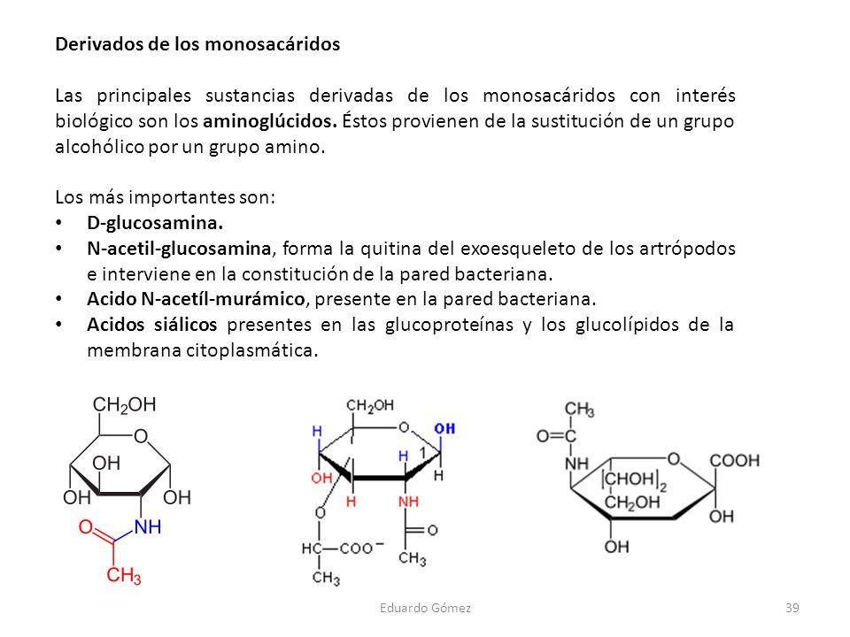 Derivados de los monosacáridos Las principales sustancias derivadas de los monosacáridos con interés biológico son los aminoglúcidos. Éstos provienen