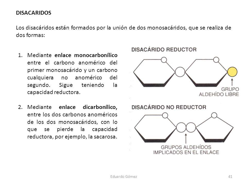 DISACARIDOS Los disacáridos están formados por la unión de dos monosacáridos, que se realiza de dos formas: 41Eduardo Gómez 1.Mediante enlace monocarb