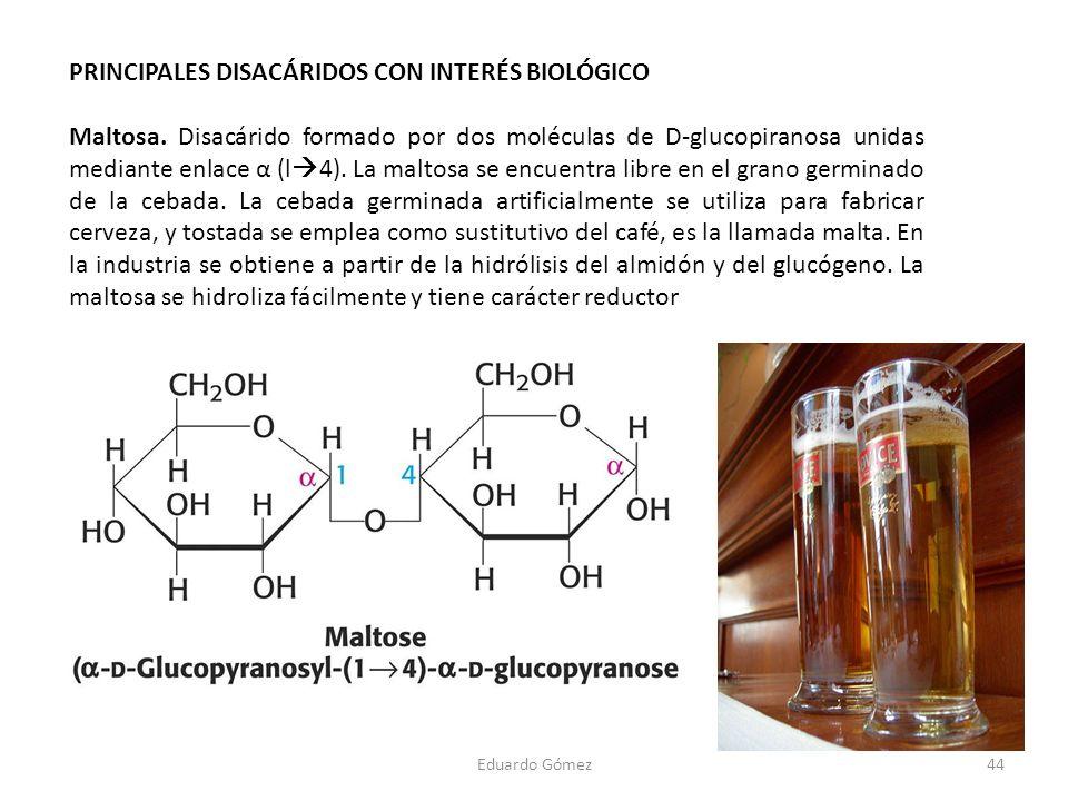 PRINCIPALES DISACÁRIDOS CON INTERÉS BIOLÓGICO Maltosa. Disacárido formado por dos moléculas de D-glucopiranosa unidas mediante enlace α (l 4). La malt
