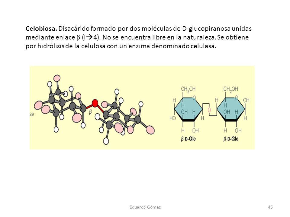 Celobiosa. Disacárido formado por dos moléculas de D-glucopiranosa unidas mediante enlace β (l 4). No se encuentra libre en la naturaleza. Se obtiene