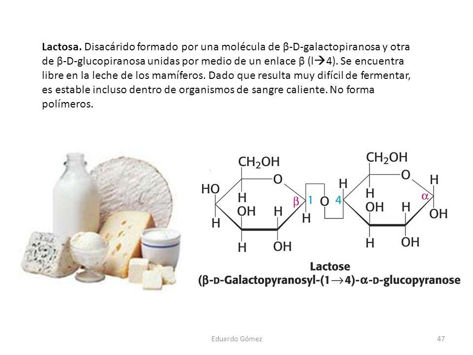 Lactosa. Disacárido formado por una molécula de β-D-galactopiranosa y otra de β-D-glucopiranosa unidas por medio de un enlace β (l 4). Se encuentra li