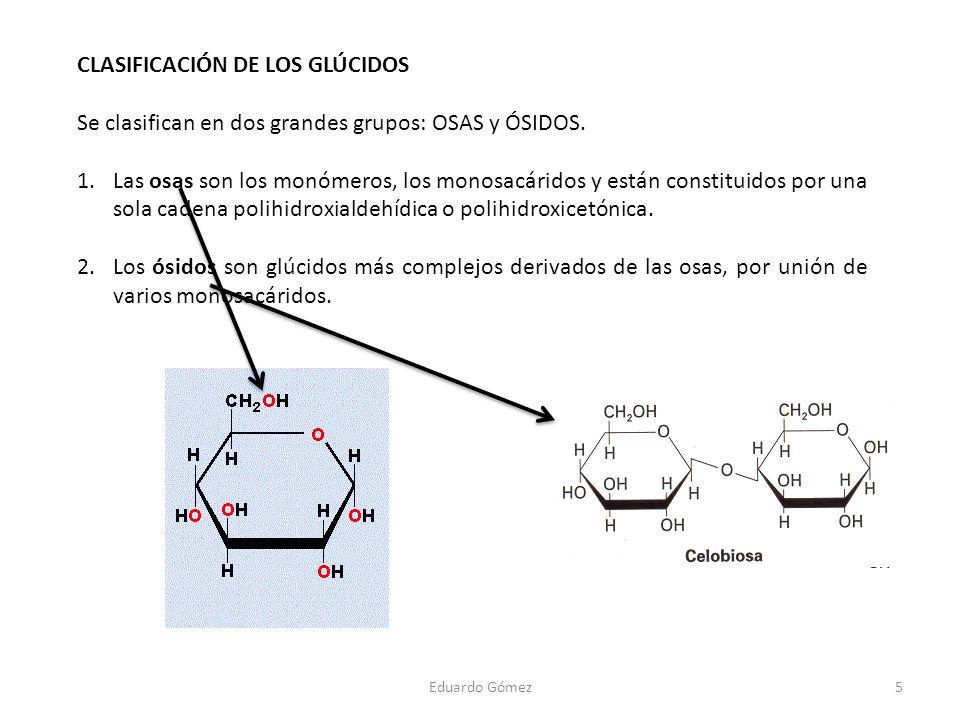 CLASIFICACIÓN DE LOS GLÚCIDOS Se clasifican en dos grandes grupos: OSAS y ÓSIDOS. 1.Las osas son los monómeros, los monosacáridos y están constituidos