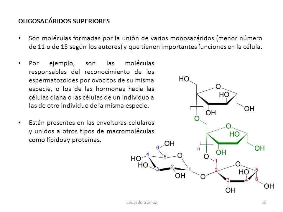 OLIGOSACÁRIDOS SUPERIORES Son moléculas formadas por la unión de varios monosacáridos (menor número de 11 o de 15 según los autores) y que tienen impo