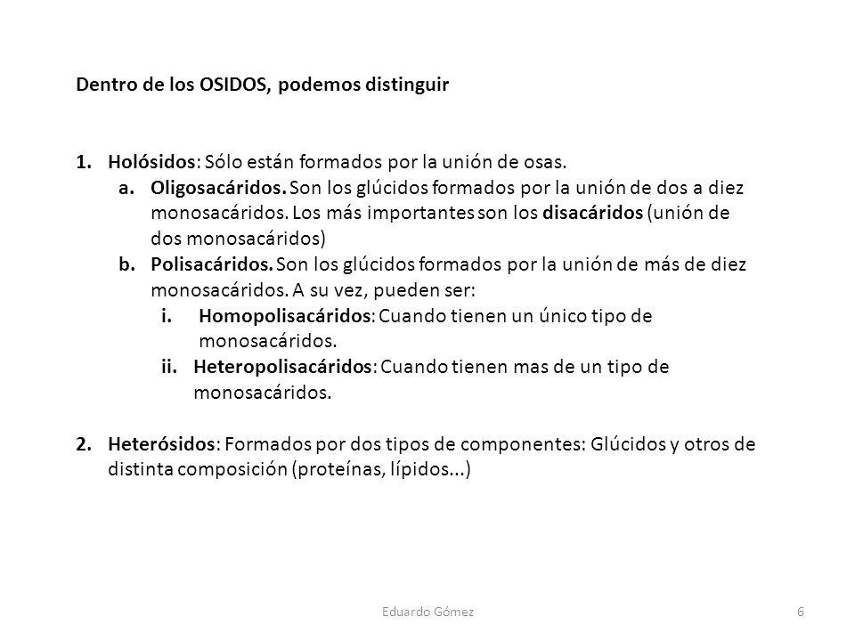 Dentro de los OSIDOS, podemos distinguir 1.Holósidos: Sólo están formados por la unión de osas. a.Oligosacáridos. Son los glúcidos formados por la uni