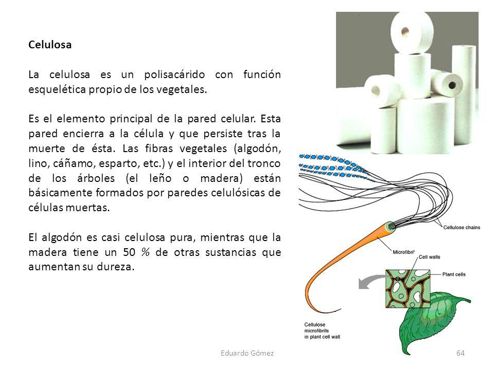 Celulosa La celulosa es un polisacárido con función esquelética propio de los vegetales. Es el elemento principal de la pared celular. Esta pared enci
