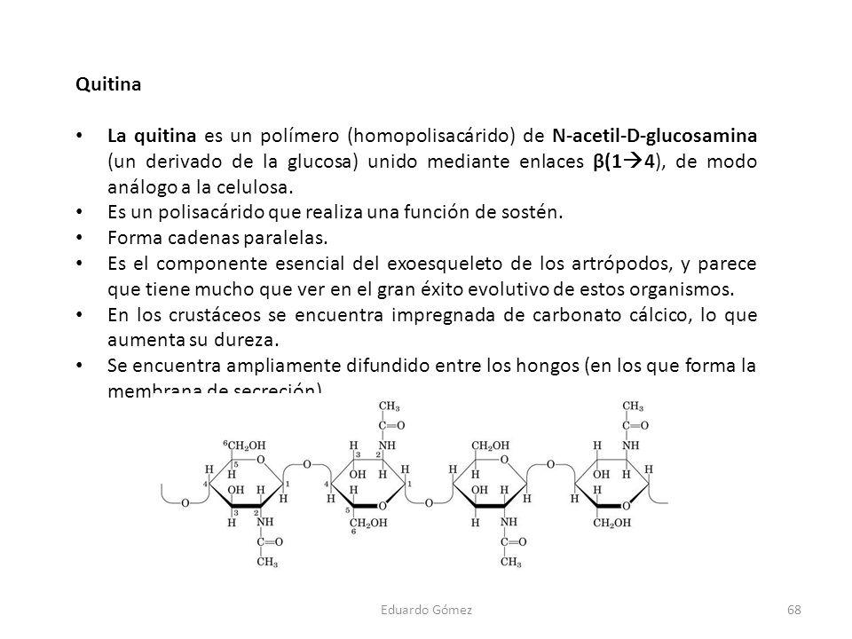 Quitina La quitina es un polímero (homopolisacárido) de N-acetil-D-glucosamina (un derivado de la glucosa) unido mediante enlaces β(1 4), de modo anál