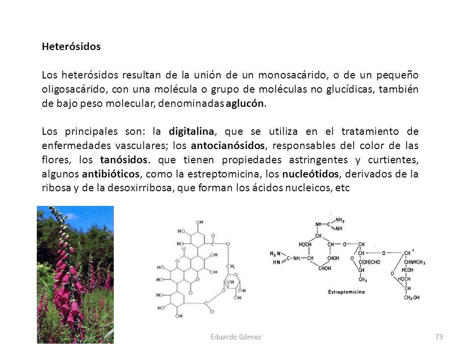 Heterósidos Los heterósidos resultan de la unión de un monosacárido, o de un pequeño oligosacárido, con una molécula o grupo de moléculas no glucídica