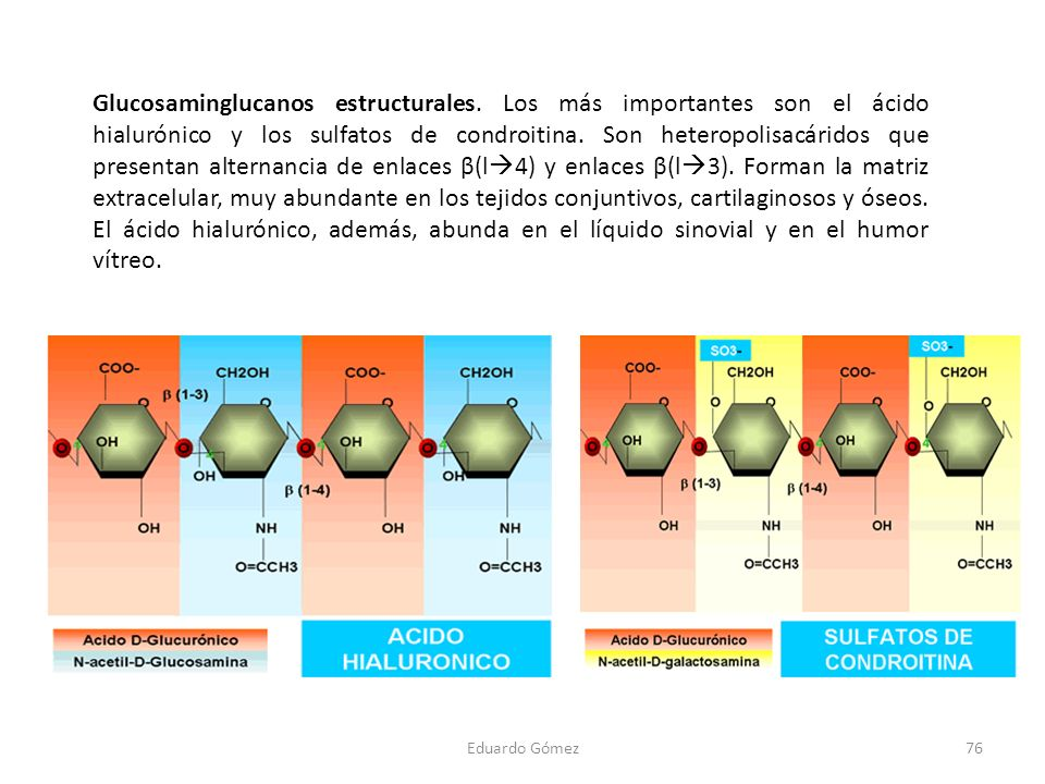 Glucosaminglucanos estructurales. Los más importantes son el ácido hialurónico y los sulfatos de condroitina. Son heteropolisacáridos que presentan al