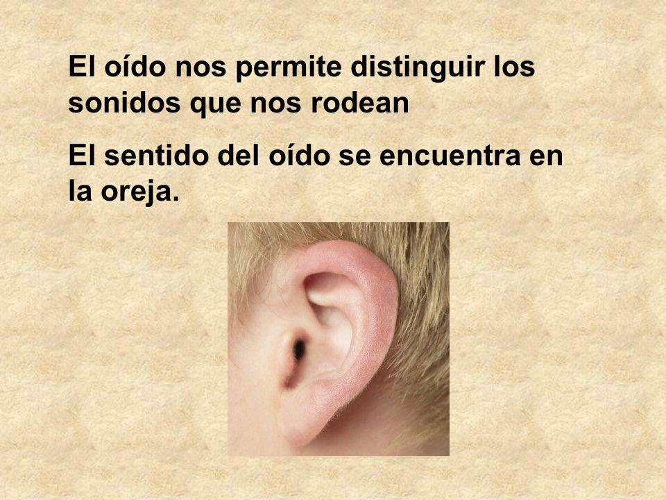 El oído nos permite distinguir los sonidos que nos rodean El sentido del oído se encuentra en la oreja.