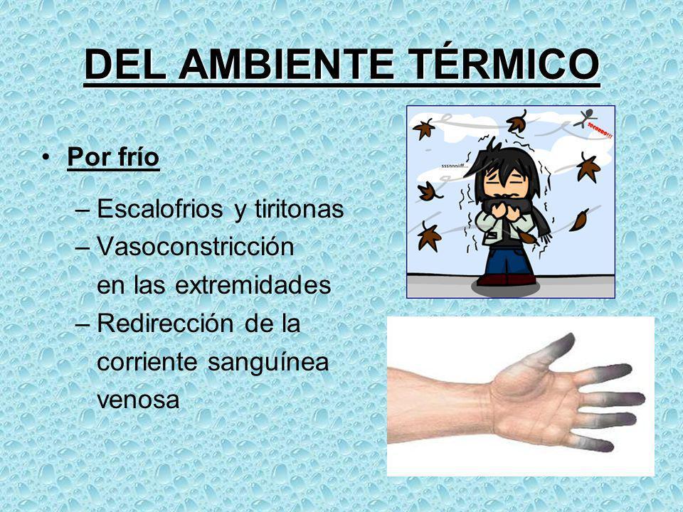 Por frío –Escalofrios y tiritonas –Vasoconstricción en las extremidades –Redirección de la corriente sanguínea venosa