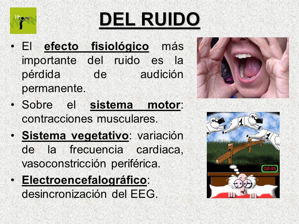 DEL RUIDO El efecto fisiológico más importante del ruido es la pérdida de audición permanente. Sobre el sistema motor: contracciones musculares. Siste