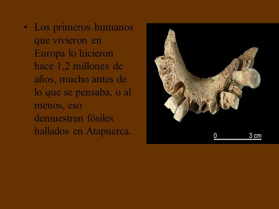 Descubren en Atapuerca la mandíbula del homínido europeo más antiguo Descubren en Atapuerca la mandíbula del homínido europeo más antiguo