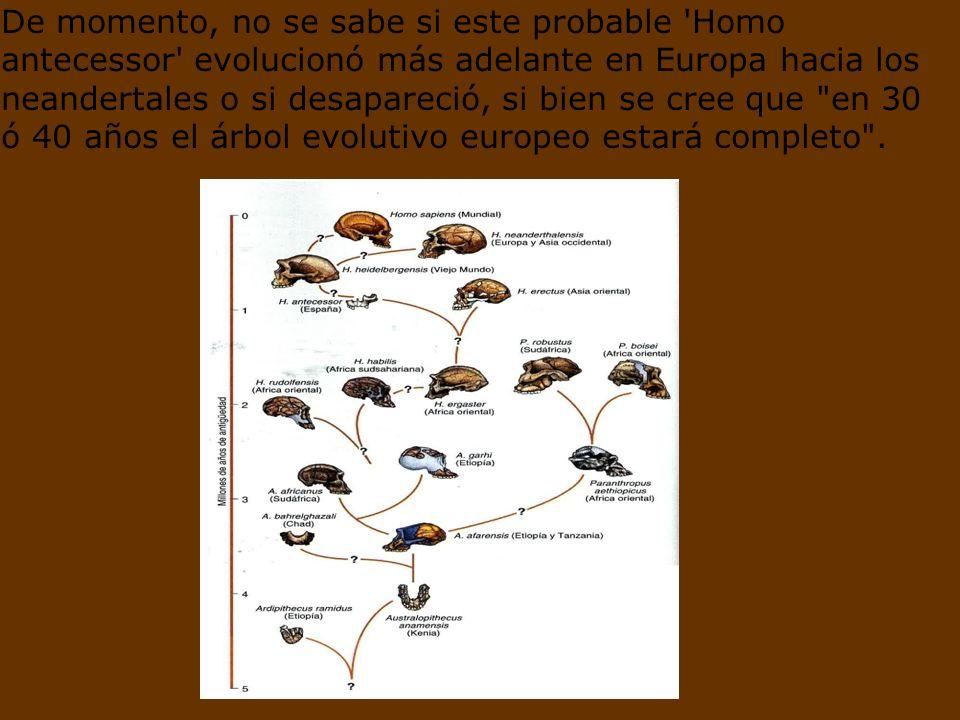 El hallazgo agrega solidez a la teoría que sostiene que los primeros humanos partieron desde África a través de Oriente Próximo y no a través del Estr
