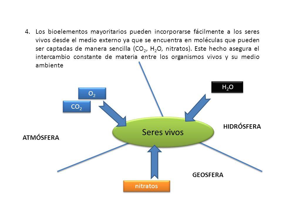 4.Los bioelementos mayoritarios pueden incorporarse fácilmente a los seres vivos desde el medio externo ya que se encuentra en moléculas que pueden se